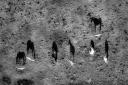 black shadows for a white horses / les negres ombres dels cavalls blancs