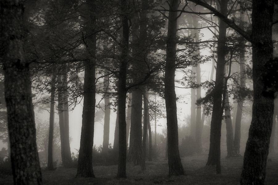 Un bosc i una mica de boira