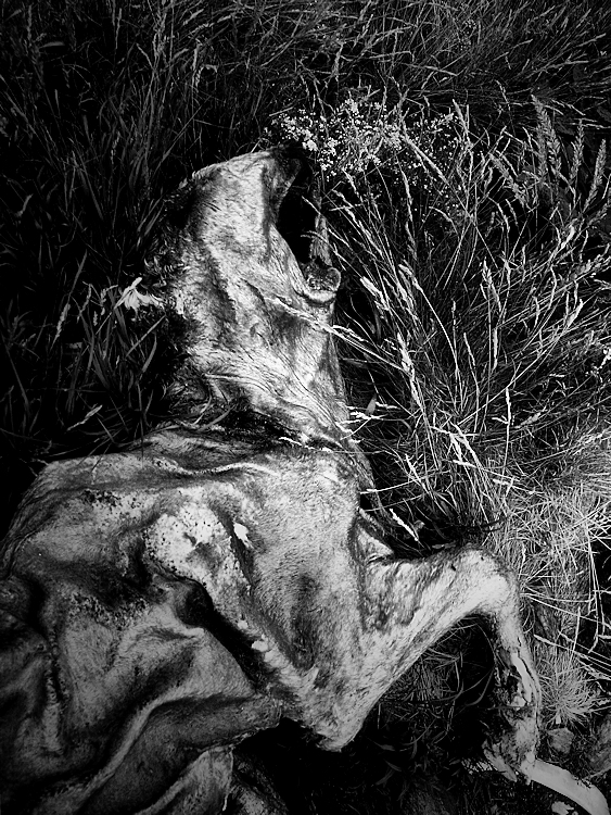 death on the grass / la mort a les pastures