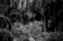the souls of the forest / les ànimes del bosc