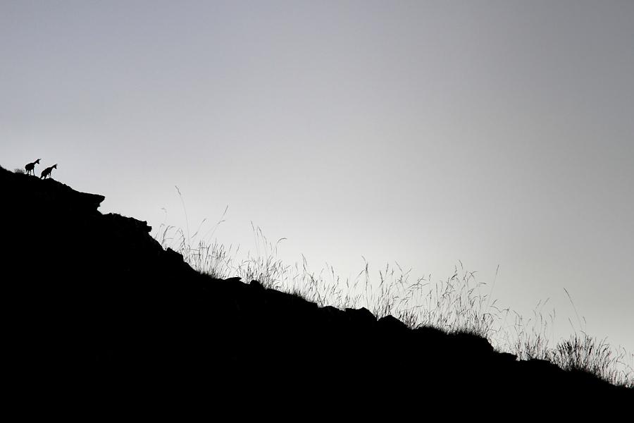 mountain meadow / prat de muntanya