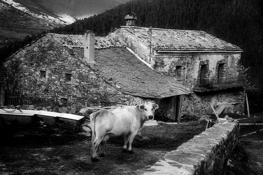 rural world