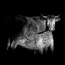 we are mammals / som mamífers