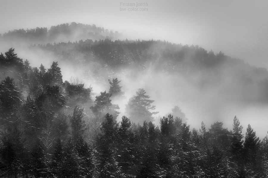 blizzard in the forest / el torb al bosc