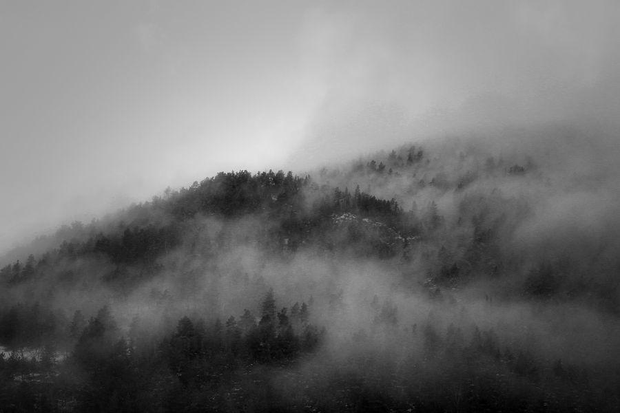 foggy forest / bosc emboirat