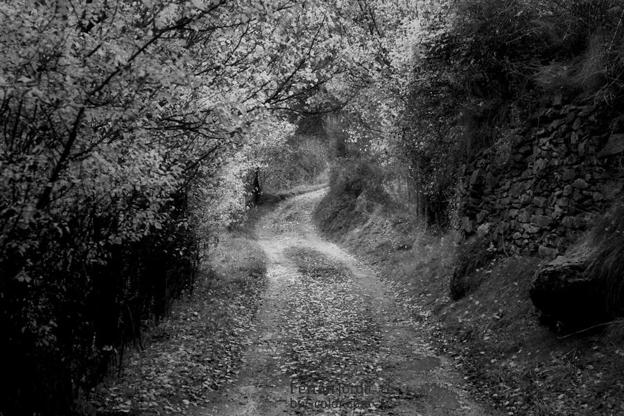 El camí (a la font del Coronel)