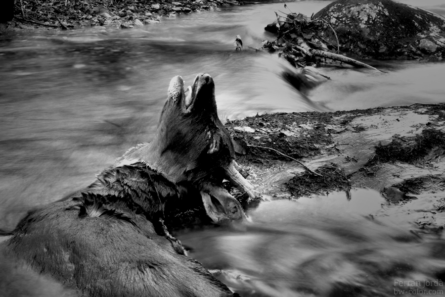 death in the river / mort al riu