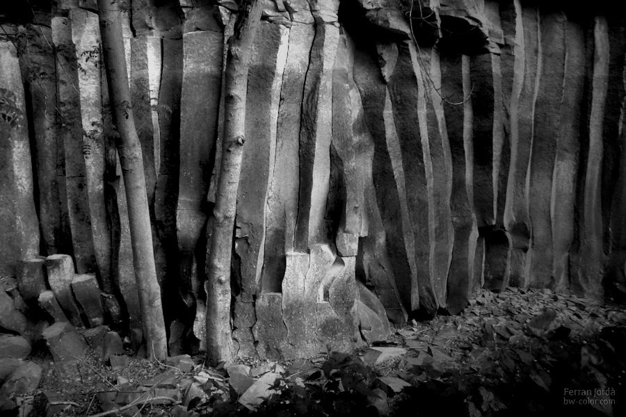 d'arbres i colades de lava