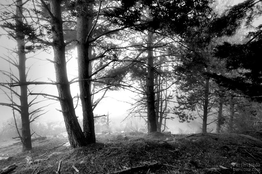escenes d'un bosc amb boira